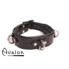 Avalon - VICTORY - Enkel Collar med D-ringer og polstring, Sort